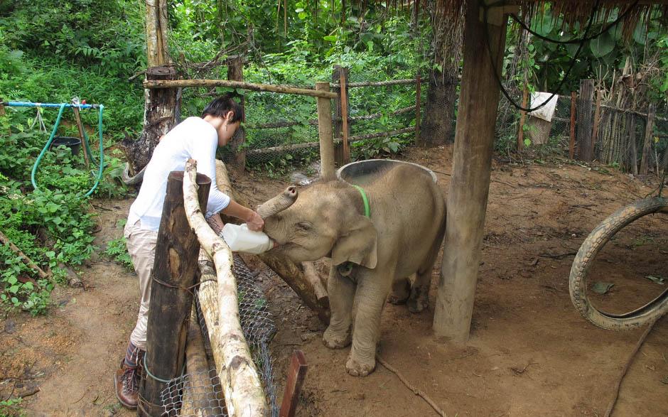 voluntario elefante
